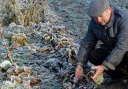 """Confagricoltura Campania. """"La neve porta danni a strutture agricole, frutteti e colture ortive"""""""