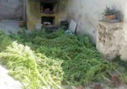 PASTORANO. Coltivava droga nel giardino di casa: arrestato 43enne del posto.