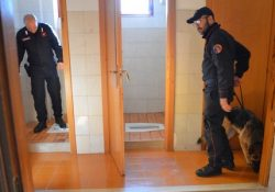 Sesto Campano / Poggio Sannita. Controlli antidroga dei Carabinieri presso Istituti Scolastici: due studenti in possesso di marijuana.