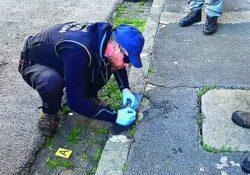 Venafro. Bocconi avvelenati sparsi in città: in campo la task force dei Carabinieri Forestali e Nucleo cinofilo antiveleno.