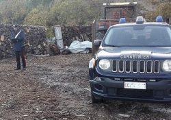Venafro. Furto di legna: i Carabinieri denunciano sette persone tra titolari e dipendenti di un'impresa boschiva.