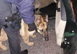 Isernia \ Provincia. Droga e alcool, controlli straordinari dei Carabinieri: scattano denunce e sequestri.