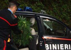 Tocco Caudio / Arpaia. Armi e droga, diverse operazioni dei carabinieri: dosi in cucina e nello sciaquone del bagno.