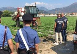 Venafro. Impiega lavoratori irregolari in una impresa agricola: contestata violazione amministrativa.