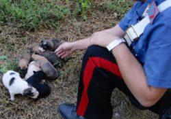 Roccamandolfi. Cuccioli di cane abbandonati da ignoti, per fortuna vengono trovati e salvati dai Carabinieri.