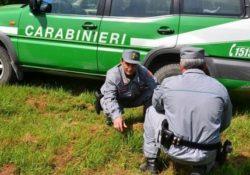 Isernia / Provincia. Cane tenuto in condizioni precarie: i Carabinieri Forestali denunciano il proprietario.