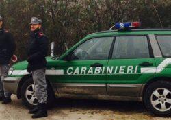 Venafro. Trasporto di prodotti alimentari in assenza di idonee condizioni igienico-sanitarie: denunciato commerciante al controllo dei Carabinieri Forestali.