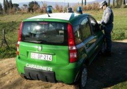 Isernia / Provincia. Controlli dei Carabinieri Forestali nelle aziende agricole: elevata una sanzione.