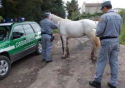 Frosolone. Porta i suoi cavalli a pascolare in un fondo altrui: i Carabinieri Forestali denunciano una persona.