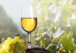 """Castelvenere. La Festa del vino: in città dal 23 al 25 agosto prossimi nel dossier di """"Sannio Falanghina""""."""