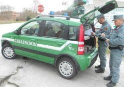 Forlì del Sannio. Controlli di polizia veterinaria da parte dei Carabinieri Forestali: scattano sanzioni.
