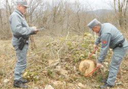 Frosolone. Taglio di bosco irregolare con operai in nero: denuncia dai Carabinieri Forestali.
