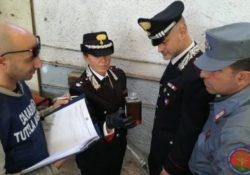 Venafro / Isernia. Carenze sui prodotti in vendita in un'attività commerciale: sequestri e 25mila euro di sanzioni dai Carabinieri Forestali.