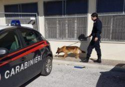 """Montesarchio. Controlli dei carabinieri con unità cinofile presso Istituti scolastici: la droga non sfugge al fiuto di """"Tex"""" e """"Gero""""."""