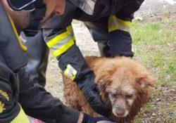 Venafro. Cane cade nel torrente Rava: tratto in salvo dai vigili del fuoco.