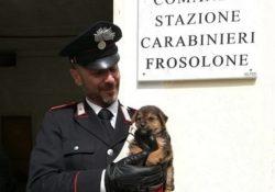 Frosolone. Cagnolino abbandonato lungo la strada, salvato dai Carabinieri.