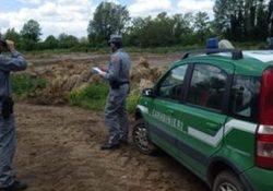 RIARDO / PIETRAMELARA. Area sulla quale sono stati sversati e smaltiti illecitamente rifiuti  di origine zootecnica: sequestro preventivo dei carabinieri forestali.