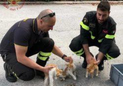 Isernia / Provincia. Gatti abbandonati in un condominio: intervengono i vigili del fuoco a rifocillarli.
