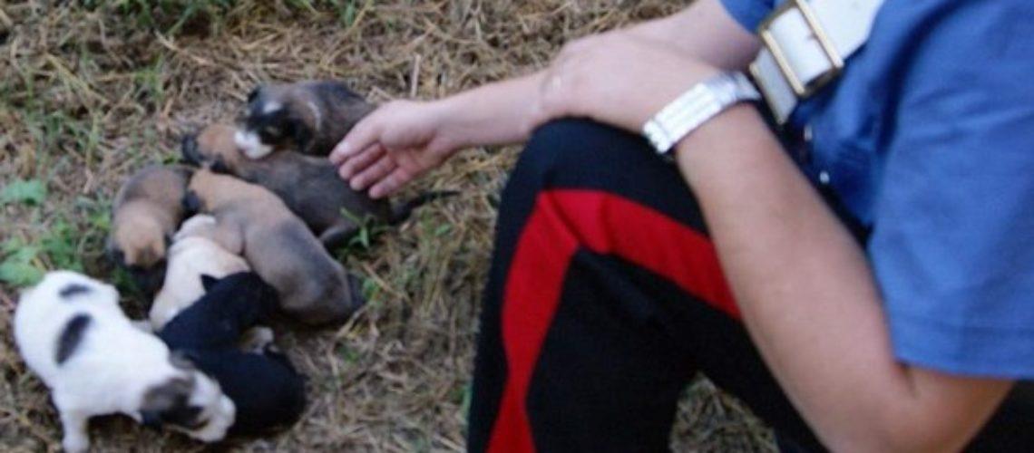 PIETRAMELARA. Cuccioli di cani randagi avvelenati per strada: monta la protesta.