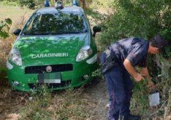 Frosolone. Carabinieri forestale sequestrano richiamo acustico vietato per l'uso venatorio e denunciano due cacciatori.