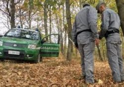 Pescopennataro. Raccolta tartufo, i Carabinieri Forestali sanzionano cavatore senza tesserino.