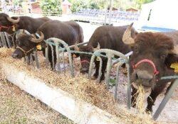 Caserta / Provincia. Ripresa post Covid: al Polo Fieristico A1 Expò si festeggia la bufala.