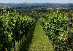 Lapio. Wine trekking: il 16 agosto degustazioni, passeggiate a piedi e a cavallo nel borgo del Fiano.