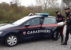 San Polo Matese / Bojano. Sta finendo l'ossigeno, anziana 93enne salvata dai Carabinieri: richiesta d'aiuto dalla figlia residente al Nord.