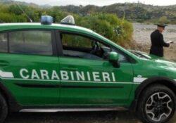 San Pietro Avellana. Effluenti zootecnici gestiti illegalmente, allevatore denunciato: la scoperta dei Carabinieri Forestali.