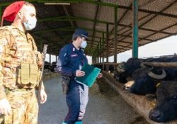 VAIRANO PATENORA. Sequestrato complesso aziendale bufalino per illecito smaltimento reflui zootecnici: operazione dei carabinieri forestali.