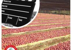 Caserta / Provincia. Un video con ricetta che abbia come base la mela annurca: l'iniziativa del Consorzio Melannurca IGP.