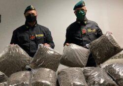 Caserta / Provincia. Scoperti 300 kg di marijuana del valore di 3 milioni di euro all'interno di un capannone agricolo: i sequestri della Finanza.
