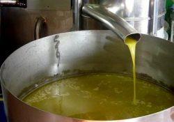 Cerreto Sannita / San Lupo. Acque reflue di lavorazione delle olive sversate direttamente in un canale vicino all'opificio: denunciato il proprietario di un frantoio.