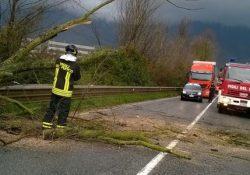 Venafro / Sesto Campano / Castelpetroso. Molto impegno nelle ultime ore per i Vigili del Fuoco: alberi lungo le arterie, recupero automezzi, frane e smottamenti.
