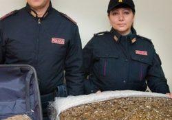 TEANO / SESSA AURUNCA. Spacciava marijuana e cocaina purissima: arrestata dagli agenti della Polizia di Stato del locale Commissariato una 33enne del posto.