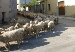 Buonalbergo / San Giorgio la Molara. La Festa della Transumanza: in scena i prodotti tipici e il bagno delle pecore.