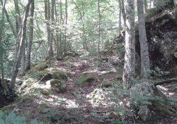 Pozzilli / Filignano. Va in un bosco a raccogliere gli asparagi, anziana 70enne si perde ma viene salvata dai Carabinieri.