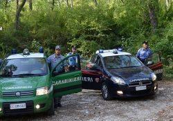 Carovilli / Frosolone. Abbandonano in modo incontrollato rifiuti speciali in una zona boschiva sottoposta a vincolo ambientale: denunce dei Carabinieri Forestali.