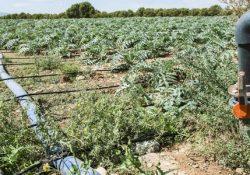 PIEDIMONTE MATESE / SANNIO. Temperature torride e terreni secchi, chiesta l'irrigazione straordinaria: arriva l'ok dal Consorzio di Bonifica.