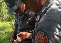 Sesto Campano. Trasporto di cardellini catturati illegalmente: denunciato 60enne dai Carabinieri Forestale.