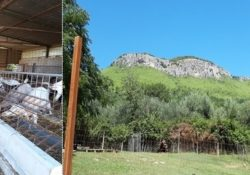 PRATELLA. Roccavecchia di Pratella. Padre e figlio, Perito Agrario, imprenditori di pane e capre per accrescere il reddito.