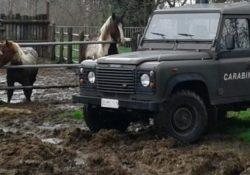 Isernia / Provincia. Controlli di polizia veterinaria su un'azienda zootecnica: 4mila euro di sanzione e sequestro di un cavallo.