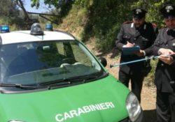 Casagiove. Carabinieri della Forestale sorprendono una persona armata di cerbottana professionale mentre è dedita al bracconaggio di fagiani.