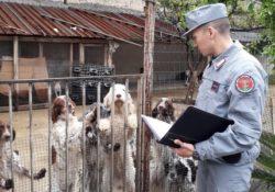 Macerata Campania. Maltrattamento di cani ricoverati in una struttura: scatta il sequestro dai Carabinieri Forestali.