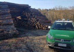 Venafro / Isernia. Tre operai di una ditta boschiva tagliavano legna senza l'utilizzo di protezione individuale: denunciati.