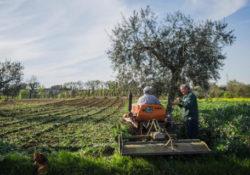 """Faicchio / Cusano Mutri / San Salvatore Telesino. Il 29° Concorso fotografico """"Immagini del Sannio rurale 2020""""."""