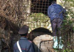 Venafro / Isernia. 5 pecore e 5 cani abbandonati in un casolare: i Carabinieri intensificano i controlli per assicurare tranquillità in occasione delle festività.
