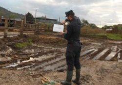 ROCCAMONFINA / SESSA AURUNCA. Sequestrata area interessata da illecito smaltimento di rifiuti zootecnici e speciali pericolosi.