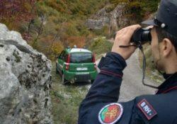 Sessano del Molise. Uccidono un capriolo: due bracconieri scoperti e denunciati dai carabinieri forestali.