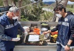 CASTEL MORRONE / CAPUA. Attività di prevenzione i materia di incendi boschivi a cura dei Carabinieri Forestali operanti in provincia casertana.